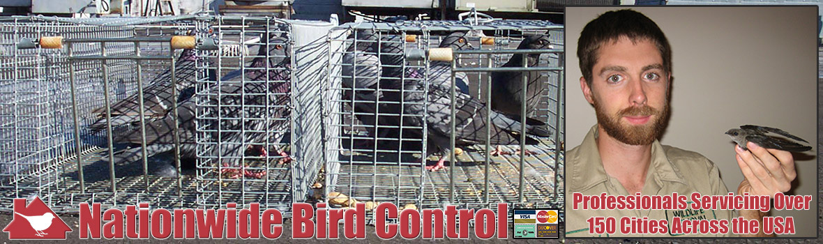 Professional Bird Control Services